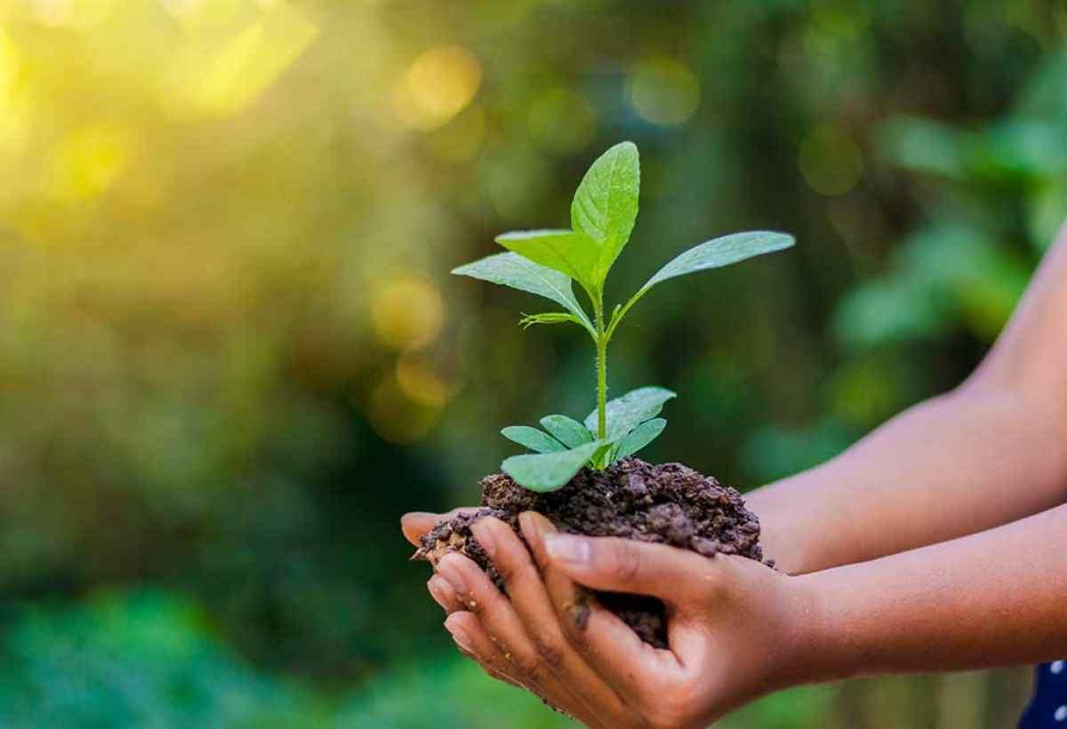 Παγκόσμια Ημέρα Περιβάλλοντος. Δράσεις του Δήμου Παπάγου – Χολαργού