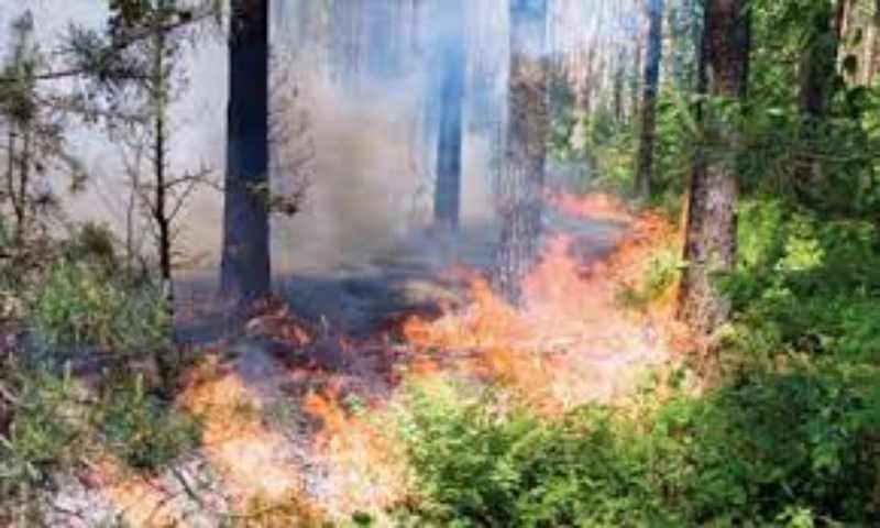 Ο Δήμος Ενημερώνει: Πολύ υψηλός κίνδυνος πυρκαγιάς σήμερα. Προσοχή!
